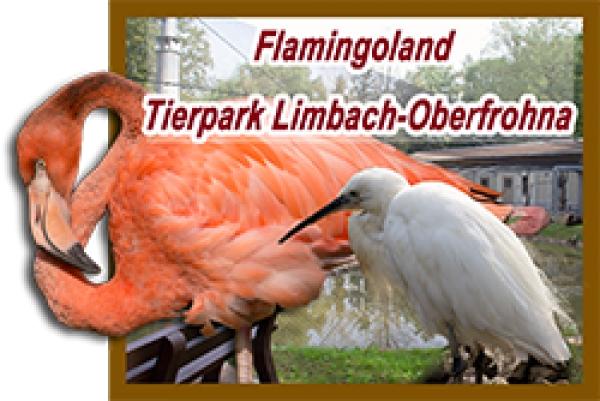 Tierpark Limbach Oberfrohna Eröffnet Flamingoland Neues
